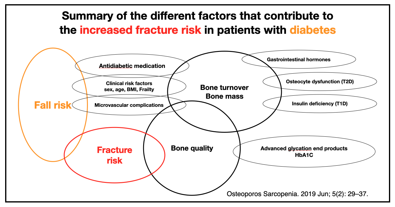 Summary of the different factors that contribute to the increased fracture risk in patients with diabetes